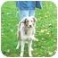 Photo 3 - Australian Shepherd Puppy for adoption in Austin, Minnesota - Speedy