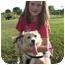 Photo 3 - Sheltie, Shetland Sheepdog/Golden Retriever Mix Puppy for adoption in PORTLAND, Maine - Sally