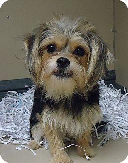 Terrier (Unknown Type, Small) Mix Dog for adoption in Fremont, Nebraska - Annie