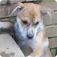 Adopt A Pet :: Pollock - Albany, NY
