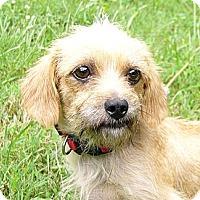 Adopt A Pet :: Nilla - Mocksville, NC