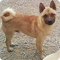 Adopt A Pet :: Kipper - Toledo, OH