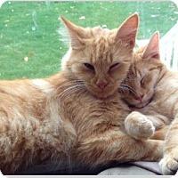 Adopt A Pet :: Priscilla - Pittstown, NJ