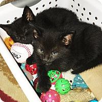 Adopt A Pet :: Piper - N. Billerica, MA