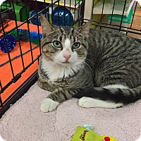 Adopt A Pet :: BOWSER - Raleigh, NC