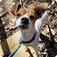 Adopt A Pet :: Jo Jo - Blue Ridge, GA
