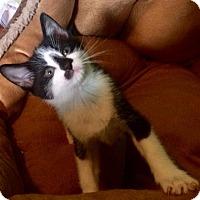 Adopt A Pet :: Rose - Greensburg, PA
