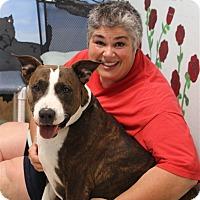 Adopt A Pet :: Dasia - Elyria, OH