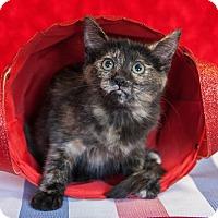 Adopt A Pet :: Hermione - Muskegon, MI