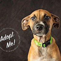 Adopt A Pet :: Clayton - Gainesville, GA