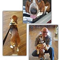 Adopt A Pet :: Lucille - Marietta, GA