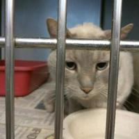 Adopt A Pet :: 35907403 - Los Lunas, NM