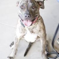 Adopt A Pet :: Maisie - Fresno, CA