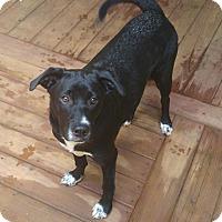 Adopt A Pet :: Penguin - Arden, NC