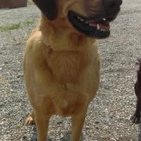 Adopt A Pet :: Cassie - Cody, WY