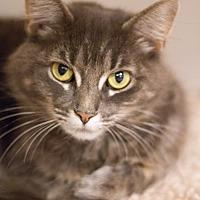 Adopt A Pet :: Valeska - Grayslake, IL