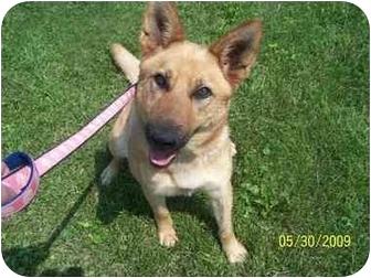 Belgian Shepherd Mix Dog for adoption in Shelbyville, Kentucky - Kelsey