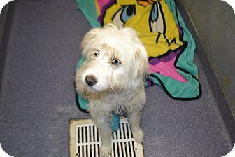 Terrier (Unknown Type, Medium) Mix Dog for adoption in Edwardsville, Illinois - Pearl