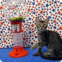 Adopt A Pet :: Kori - Orlando, FL