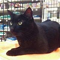Adopt A Pet :: Inky - Modesto, CA