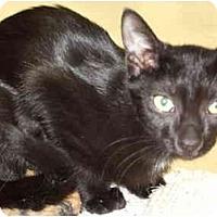 Adopt A Pet :: Saphire - Fort Lauderdale, FL