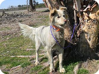Setter (Unknown Type) Mix Dog for adoption in Tyner, North Carolina - May