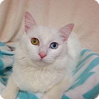 Adopt A Pet :: Bentley - Foothill Ranch, CA