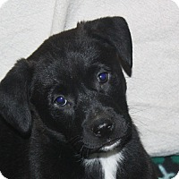 Adopt A Pet :: Ben - in Maine - kennebunkport, ME