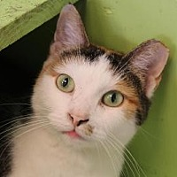 Adopt A Pet :: Moonflower - Indianapolis, IN