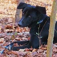 Adopt A Pet :: ARAMIS - Williston Park, NY