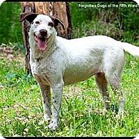 Adopt A Pet :: Britni - Houston, TX