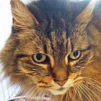 Adopt A Pet :: Phoebe - Sprakers, NY