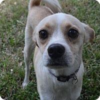 Adopt A Pet :: Mackenzie Camo in RI - Providence, RI
