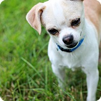 Adopt A Pet :: Zeus - Morganville, NJ
