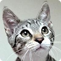Adopt A Pet :: Theodore - Westlake Village, CA