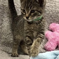 Adopt A Pet :: Yowmey - Whitestone, NY