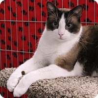 Adopt A Pet :: Rocky - Encinitas, CA