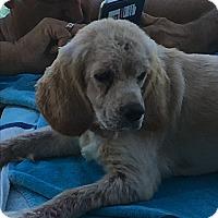 Adopt A Pet :: Mia - Scottsdale, AZ