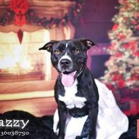 Adopt A Pet :: Jazzy - Lonely Heart - Gulfport, MS