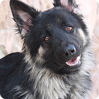 Adopt A Pet :: Odie von Odderade - Los Angeles, CA