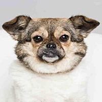 Adopt A Pet :: GEORGETTE - Wainscott, NY