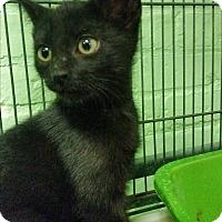 Adopt A Pet :: Rain - Bloomingdale, NJ
