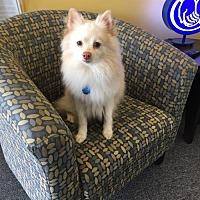 Adopt A Pet :: Casper - Delaware, OH