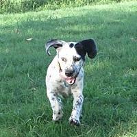 Adopt A Pet :: Ditto - Norman, OK