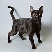 Adopt A Pet :: Petra - Houston, TX