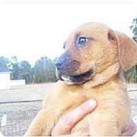 Adopt A Pet :: Dolly - Alexandria, VA