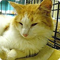 Adopt A Pet :: Boyd - Pittstown, NJ