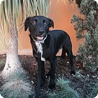 Adopt A Pet :: Jill - Orange, CA