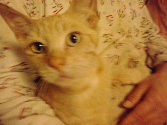 Domestic Shorthair Cat for adoption in Redding, California - 5 boys