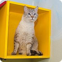 Adopt A Pet :: TOM - Poteau, OK
